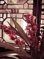 Faded purple flowers by Laura-in-china