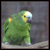Parrot by Globaludodesign