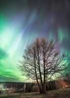 Northern Lights by TriinErg