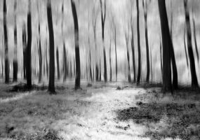 Come closer and see into the trees... by Wundenkuessen