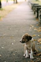 Dog by meariable