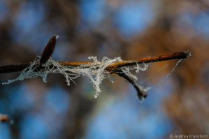 Icy droplets on branch by AndreaMetallurgico