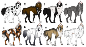 Gift Hasehund Imports [Now Available for Adoption] by EhwazMaddoxKennels