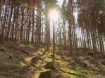 Sunbeams in the forest by Phy6