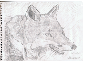 old fox by ConkerTSquirrel