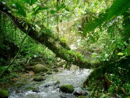 Atlantic rainforest by 8moments