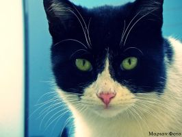 Urban Cat 3 by mmariang
