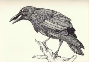 crow by kyri-IS-dark