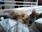 I wanna sleep, leave me... by MichelleTheCat