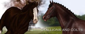 Stallions and Colts Journal by Jullelin