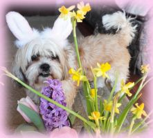 The Easter Tzu by Kittensoft
