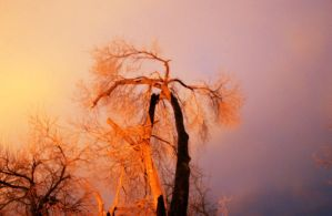 Mg 8143 by FigoTheCat
