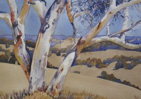 Watercolour of Australian Ghost Gum Tree by Katsenia
