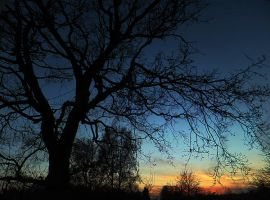 This evening with J's oak by Gwitha-Kathes