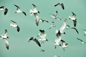 birds by knowyourrights