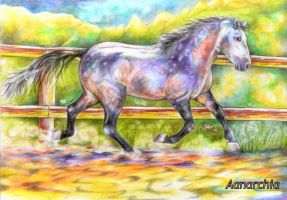 horse in color by A-anarchia