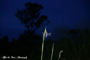 A Dragonfly at Twilight by CuriouserX10