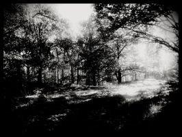 BW mystery forrest by simoner