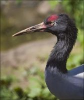 Birds of Moscow ZOO 1 by Bambr