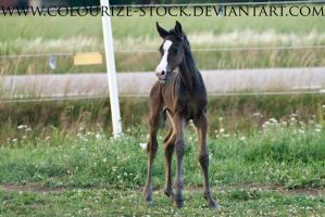 WB Filly 1 by Colourize-Stock