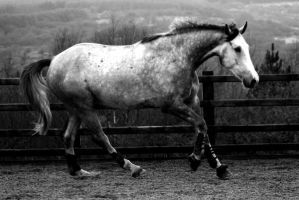 horse BW by imtl