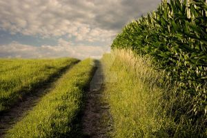 go your way by CaryM