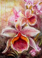 Orchids by Boias