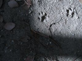 Pawprints in Shade by wonderwhatsbehind