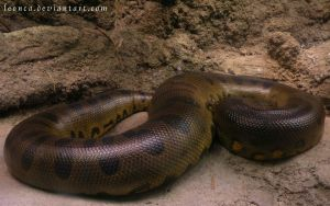 Beautiful Green Anaconda by Leonca