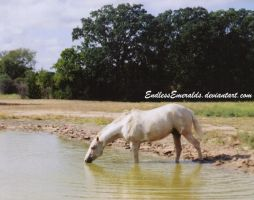 Horse Pond 3 - Stock by RebeccaStapp