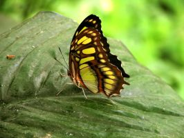 butterfly 35 by Pagan-Stock