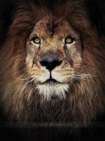 the King by zvaella
