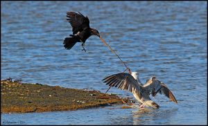 Tug Of War by andy-j-s
