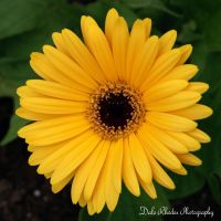 Another Yellow Flower by DalePhotography