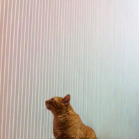 striped background with a cat in the way by Pakaku