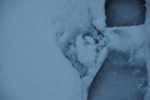 snow by instant-noodle00