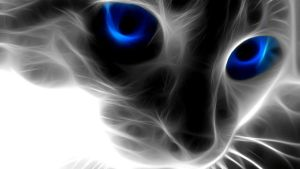 blue cat by souligame