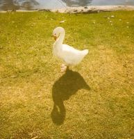 Shadow Goose by margotdent