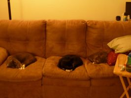 Couch Cats by PJpup