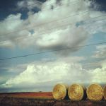 Hay, How's It Going? by shelbyrenee