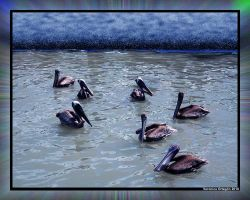 Pelican Committee by veronica1999