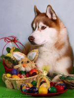 Easter 2012 - 1 by urbanhusky