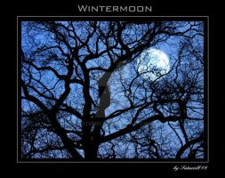 Wintermoon by Saturiell