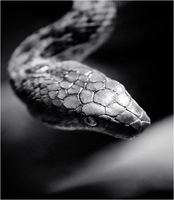 slither. by RowennaCox