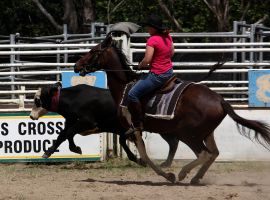 Stock - Horse Team Penning - 045 by aussiegal7