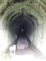 Tunnel and Ghost dog by raewhitewolf