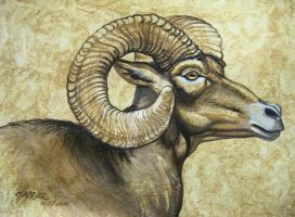 Big Horned Ram Profile by HouseofChabrier