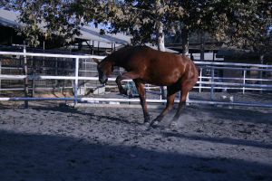 bay horse stock 35 by xbr0kendevotion
