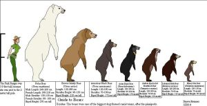 Guide to Bears by Patchi1995
