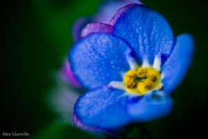 Macro Flower Power by comicidiot